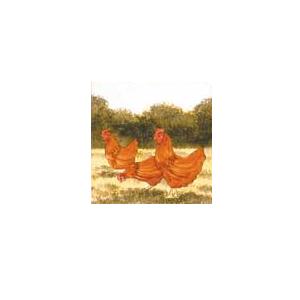 Rhode Island Hens