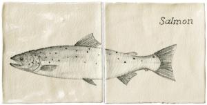 Salmon Panel